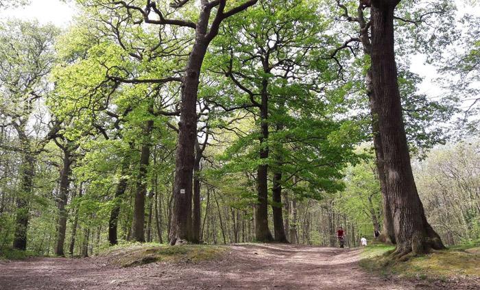 Avis sur le Programme Régional de la Forêt et du Bois (PRFB) dans l'Ile de France