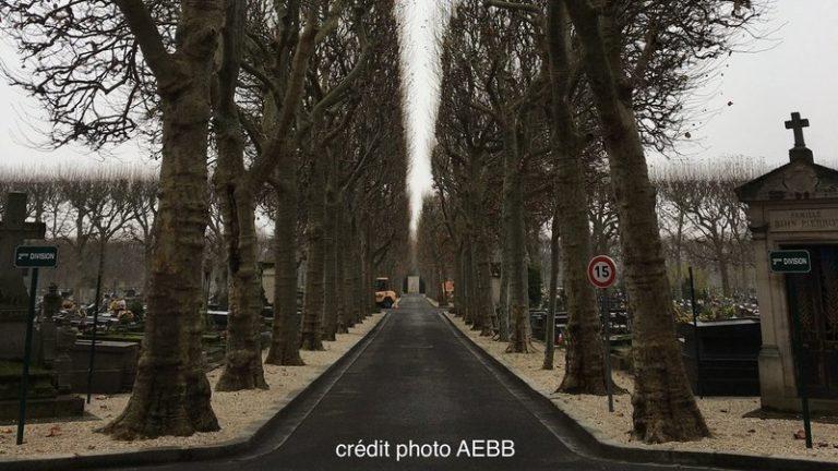 Pétition : Contre l'abattage des arbres sains à Boulogne-Billancourt !