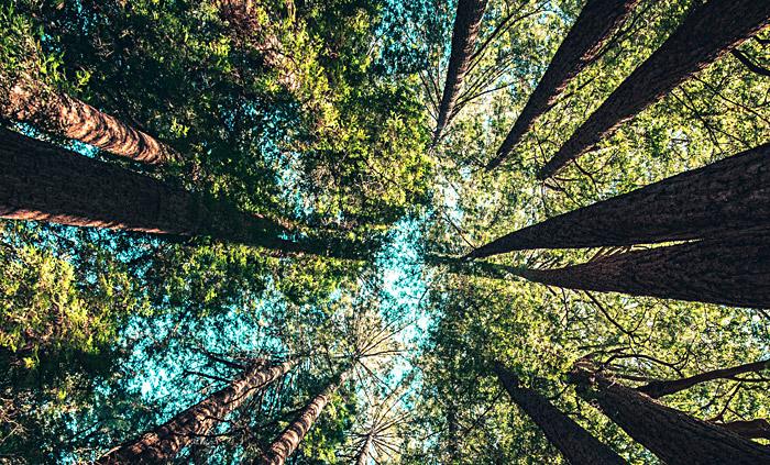 "Projet ""Planter des arbres en villes"""
