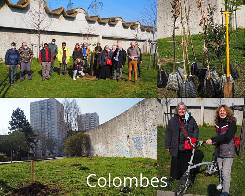 Plantation d'arbres à Colombes
