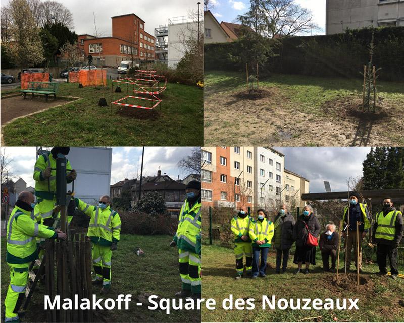 Plantation d'arbres à Malakoff