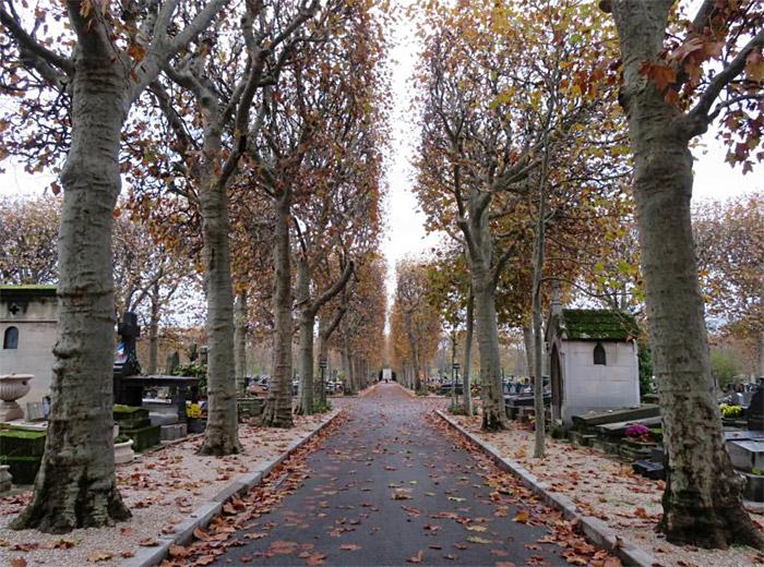 Contre l'abattage des arbres sains à Boulogne