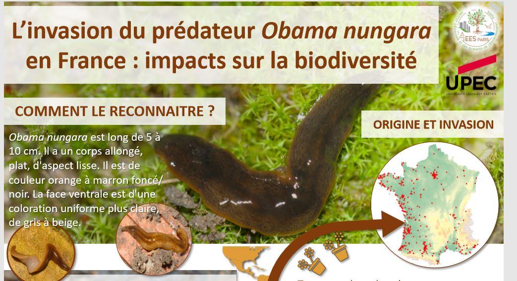 Enquête sur l'invasion d'un ver prédateur obama nungara en France