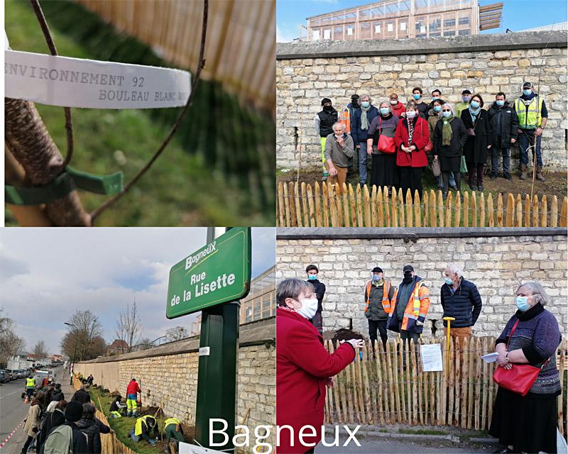 Plantation d'arbres à Bagneux