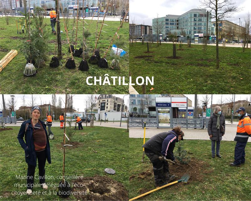 Plantation d'arbres à Châtillon